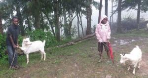 Sospita (venstre) og Levis (høyre) møtte meg tidlig onsdag 1 mai for å ta imot geitene sine