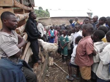 Utlevering av geiter til spente elever