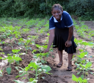 Prisca showing her sunflower training plot