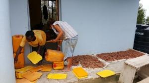 Ida fra Norge hjelper med å skjære til plantekasser i Luale. Store nøtter fra Mbeya til venstre, små fra landbruksuniversitetet til høyre