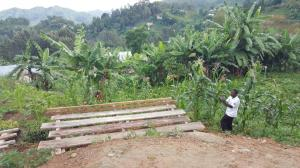 Solomon tar bilde av nylaget stativ laget for plantekassene til oppal av Macadamiatrær