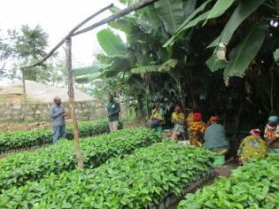 Bøndene i Luale ville gå sammen i grupper om utplantning av kaffeplanter på hver gård i februar 2019. Ellers ble 1000 planter uoverkommelig ved siden alle andre oppgaver. I april er de 17000 plantene plantet ut. Mgetas venner har bidratt med kumøkk fra Morogoro fraktet med lastebilen av Shabani sjåfør og mekaniker