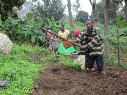 De foresatte til utvalgte jenter fra landsbyene Lukunguni, Kododo og Masalawe stiller gladelig opp for å yte tilbake for støtten jenta deres har fått for å kunne bo på internatet i Luale. Plassen på internatet er en forutsetning for at disse sårbare og vanskeliggstilte jentene fra fjerntliggende landsbyer skal kunne gå på Kikeo ungdomsskole rett ved internatet. Her planter de foresatte bønner innimellom Macadamiatrær rett bak internatet i februar 2020.